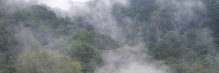 This is a picture taken on the cloud forests of Rincon de la Vieja, only the east part of the volcano experiences cloud forests, where the western slopes are dry to rain forests dominated ecosystems
