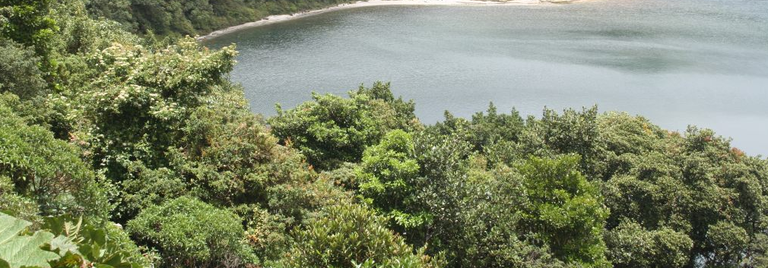 This is on one of the crater lakes of Poas Volcano at above 3,000 meters above sea level
