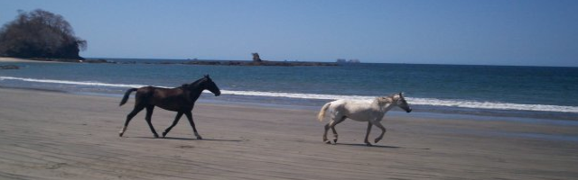 In Costa Rica horses are a believe it or not still major means of transportation.